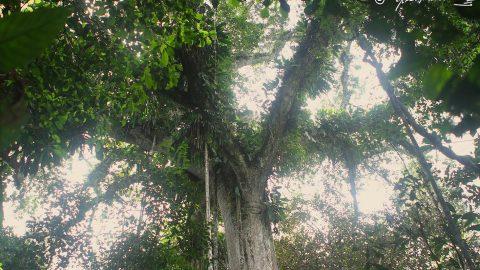 La sabiduría de la Selva.