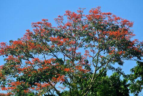 Kawsak Sacha – Selva Viviente – en los convenios, tratados y políticas de alcance internacional  realizado en torno al cambio climático y desarrollo sostenible